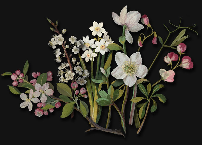 Spring: apple and plum blossom, narcissi, hellebore and sweet pea